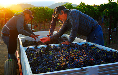2013 Napa Harvest Cornerstone Cellars